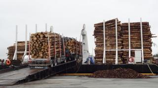 PRAKTISK Ved hjelp av den lange kjørebrua, kan tømmeret kjøres rett inn på lekteren selv fra lite tilgjengelige skogsområder. Drifts- og transportkostnadene reduseres dermed betraktelig. (Foto: Helge Kårstad).
