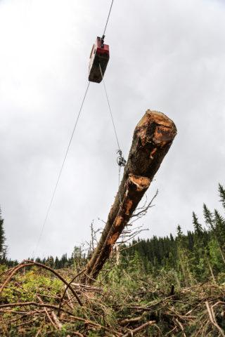 KREFTER: Når tømmeret befinner seg midt i et langt strekk, setter store krefter inn, så Frivik forankrer for 18-20 tonns press på kabelen (en 22 mm spesialkabel). (Foto: Runar F. Daler).