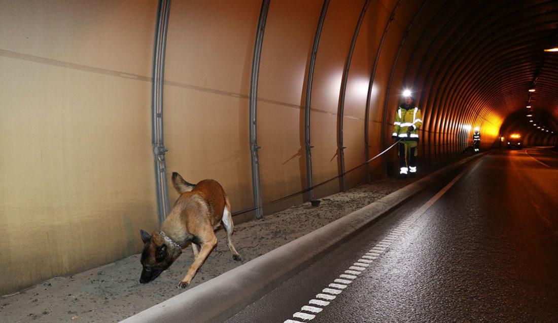 Sprengstoffhund i tunnel